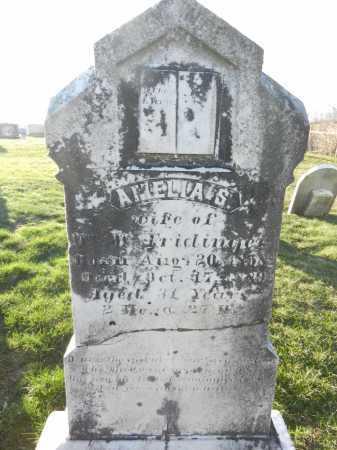 FRIDINGER, AMELIA S - Carroll County, Maryland | AMELIA S FRIDINGER - Maryland Gravestone Photos