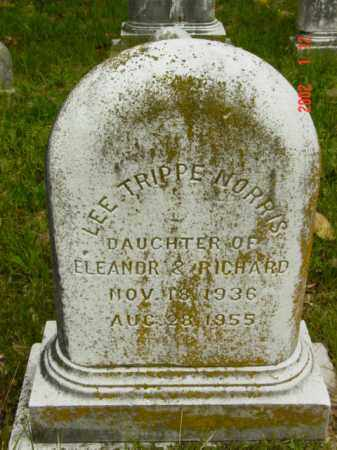 NORRIS, LEE TRIPPE - Talbot County, Maryland | LEE TRIPPE NORRIS - Maryland Gravestone Photos